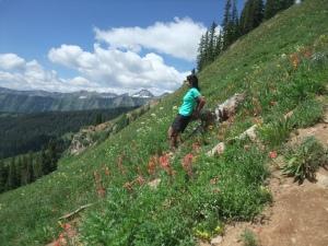 wildflowers on slope