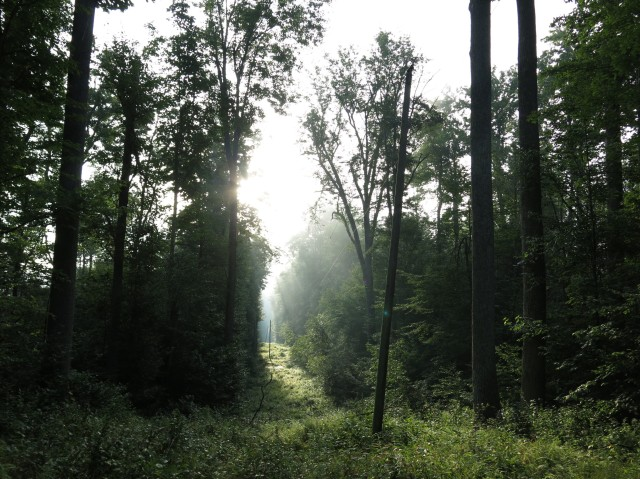Old logging road cutting into the Otter Creek Valley in early morning light