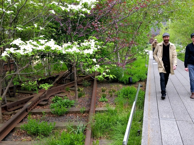 Dogwood and redbud blossoms in the spring along Manhattan's High Line.