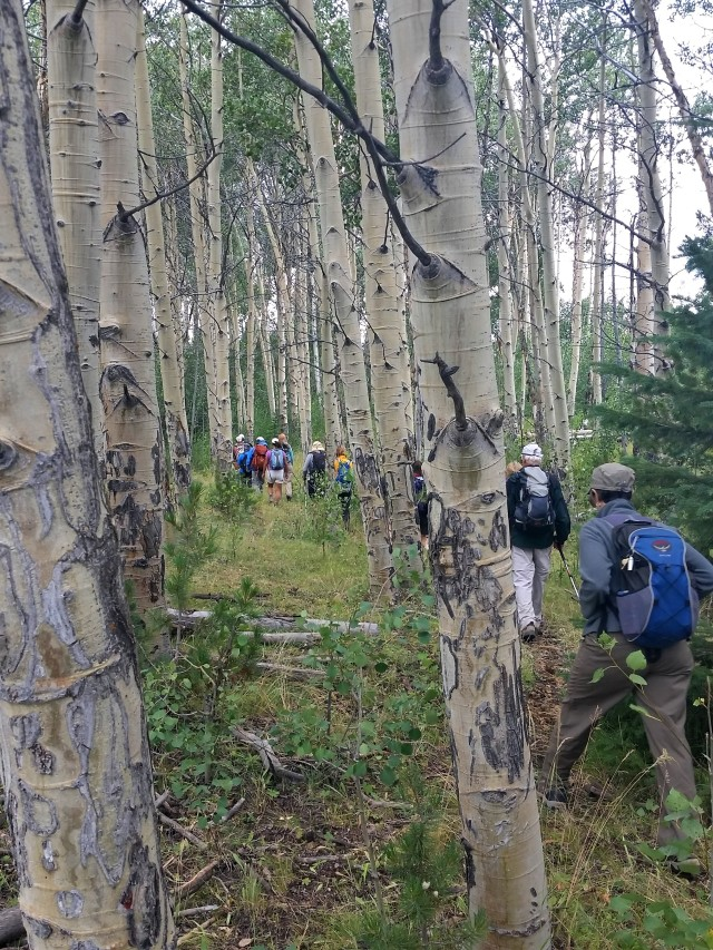 Hiking through a grove of aspen in a small fold of land on the range.