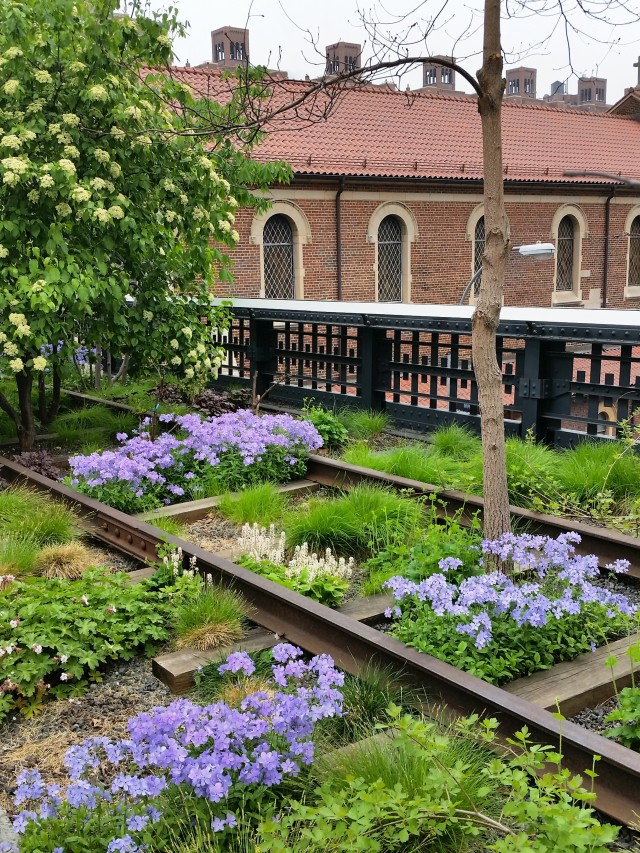 Tufts of phlox bloom along the High Line