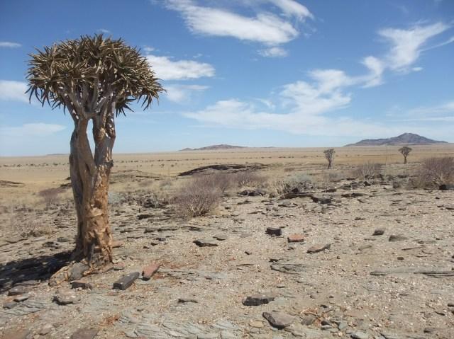 Namib desert expanse