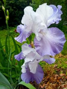 iris-140510