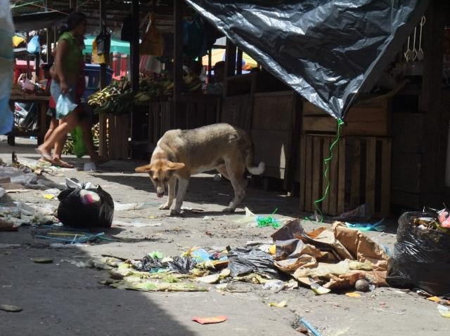A dog eyeing goodies strewn in the market alleyway