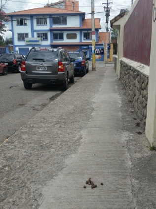 A middle class neighborhood in Cuenca but dog poop is commonplace here too