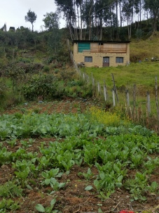 Vegetable garden in typical Sayausi house
