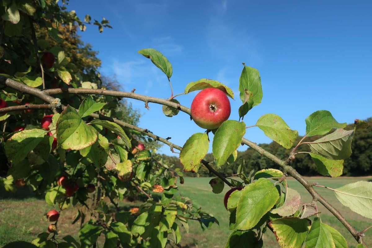 Free Fruit Feels Better Than a Million Bucks